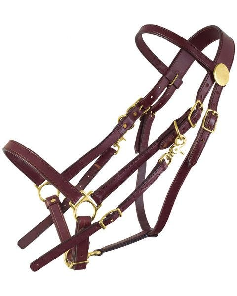 Classic Standard Halter Bridle